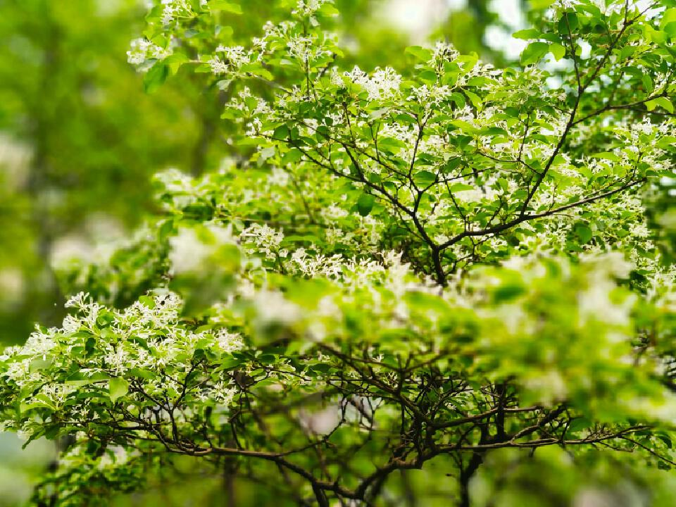花儿1.jpg